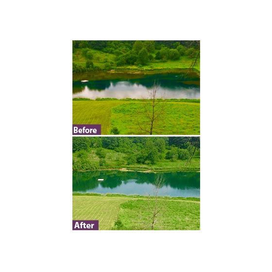 Natures Blue Pond Dye- RTU 2